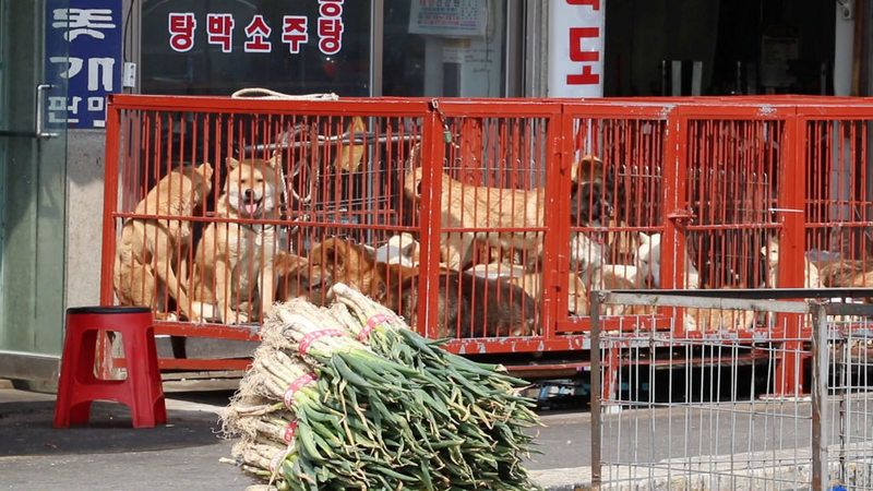 Every Day Dear Friends Millions Of Helpless Animals Those We Consider Man S Best Friend And Who Are Part Of Our Families Are Being Su Korea Changwon Dogs