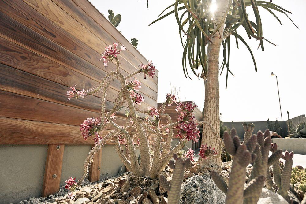 Hotel Lautner Outside With Desert Flowers California Desert Desert Road Trip