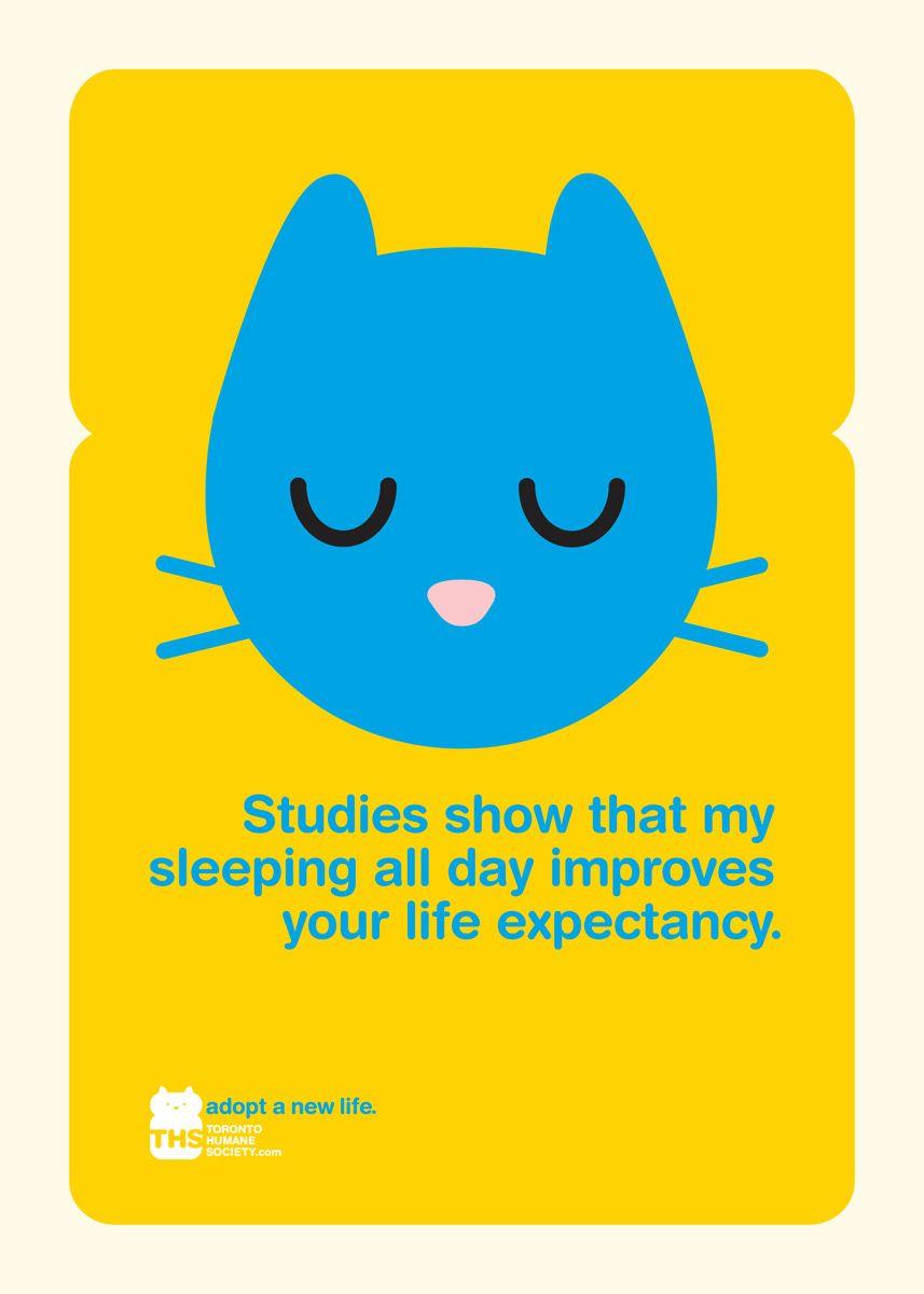 Toronto Humane Society Advert By Leo Burnett Toronto Cat