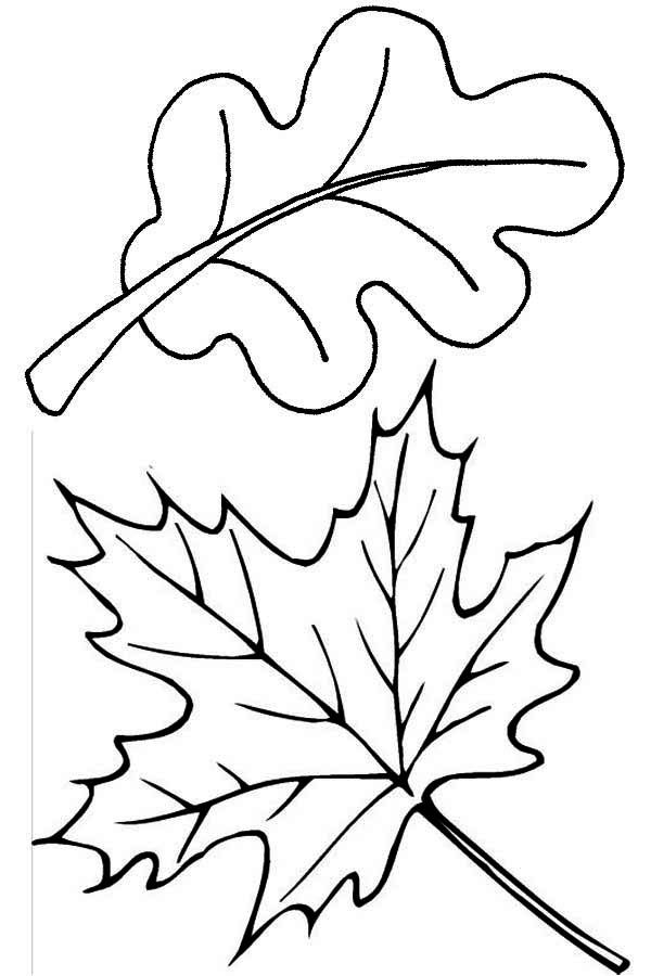 Gentil Fall Leaves Coloring Page
