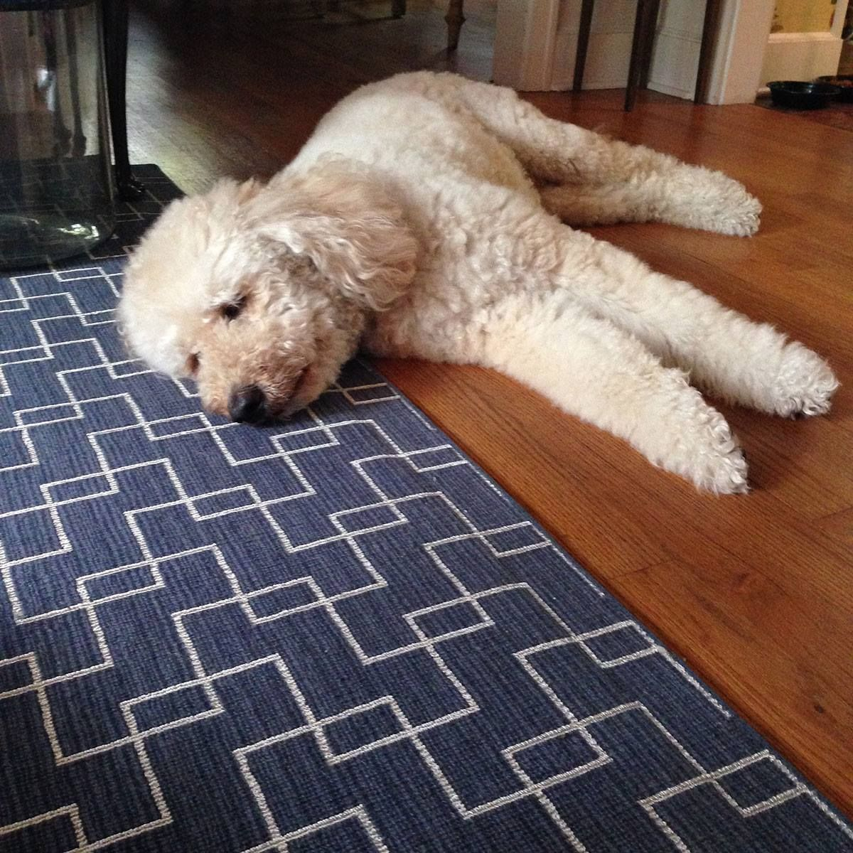 It Looks Like This Cute And Cuddly Dog Approves Of Our Castillo Rug Which Is A Navy Geometric Pattern And Perfect For Cute Little Animals Cutest Dog Ever Dogs