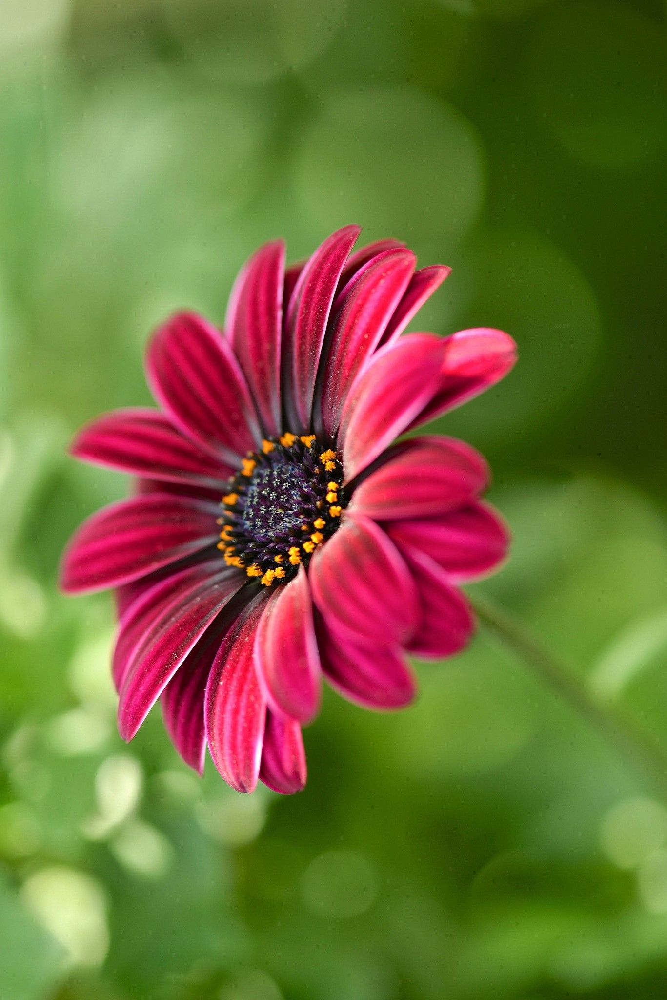 Cha Cruno Adli Kullanicinin Flowers Panosundaki Pin Cicek