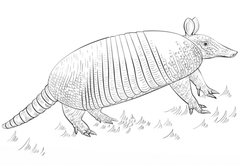 Nine-banded armadillo Coloring page | Animal coloring pages | Pinterest