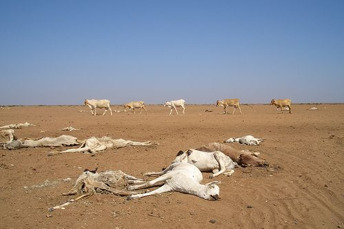 FROM DROUGHT TO DESTINY: 'Livestock-based research recommendations for better managing drought in Kenya', ILRI News Blog, 18 Jul 2011