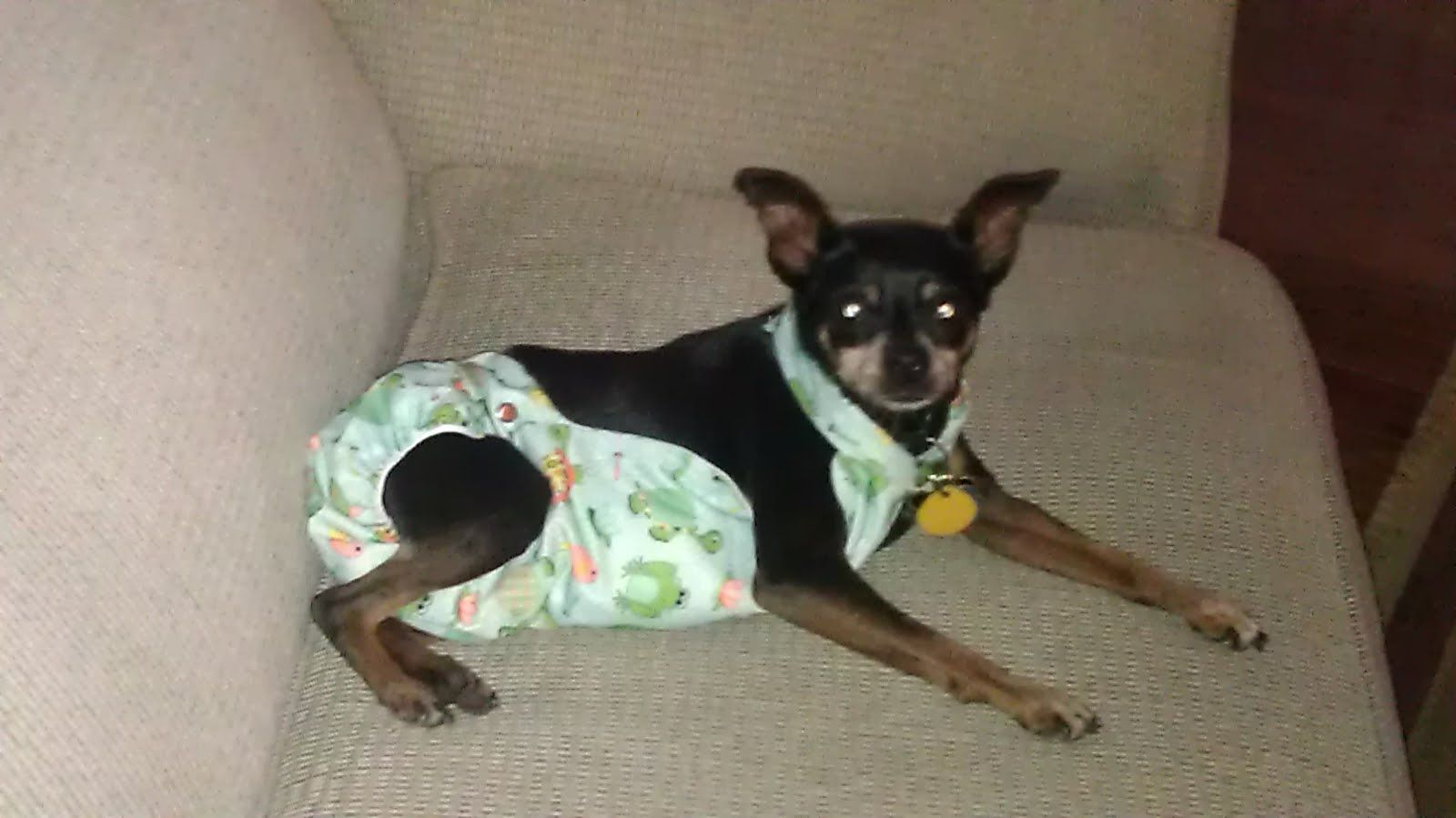 Diy Clever Doggy Diaper Bands For Disabled Doggies Girl