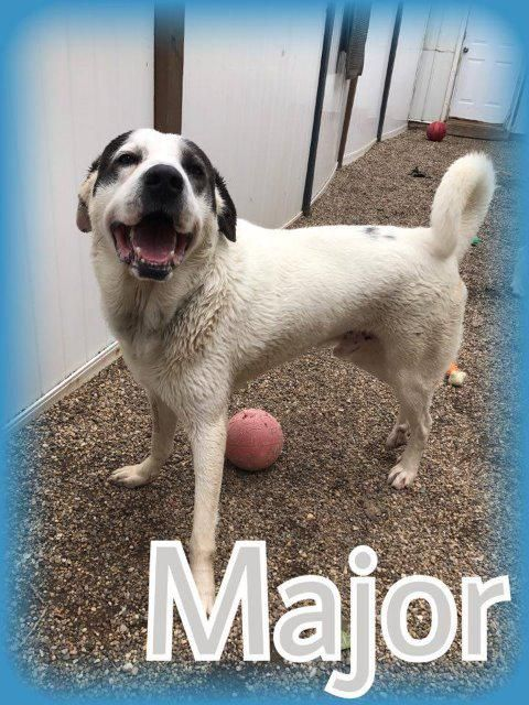 Adopt Mason On Australian Cattle Dog Dogs Pets