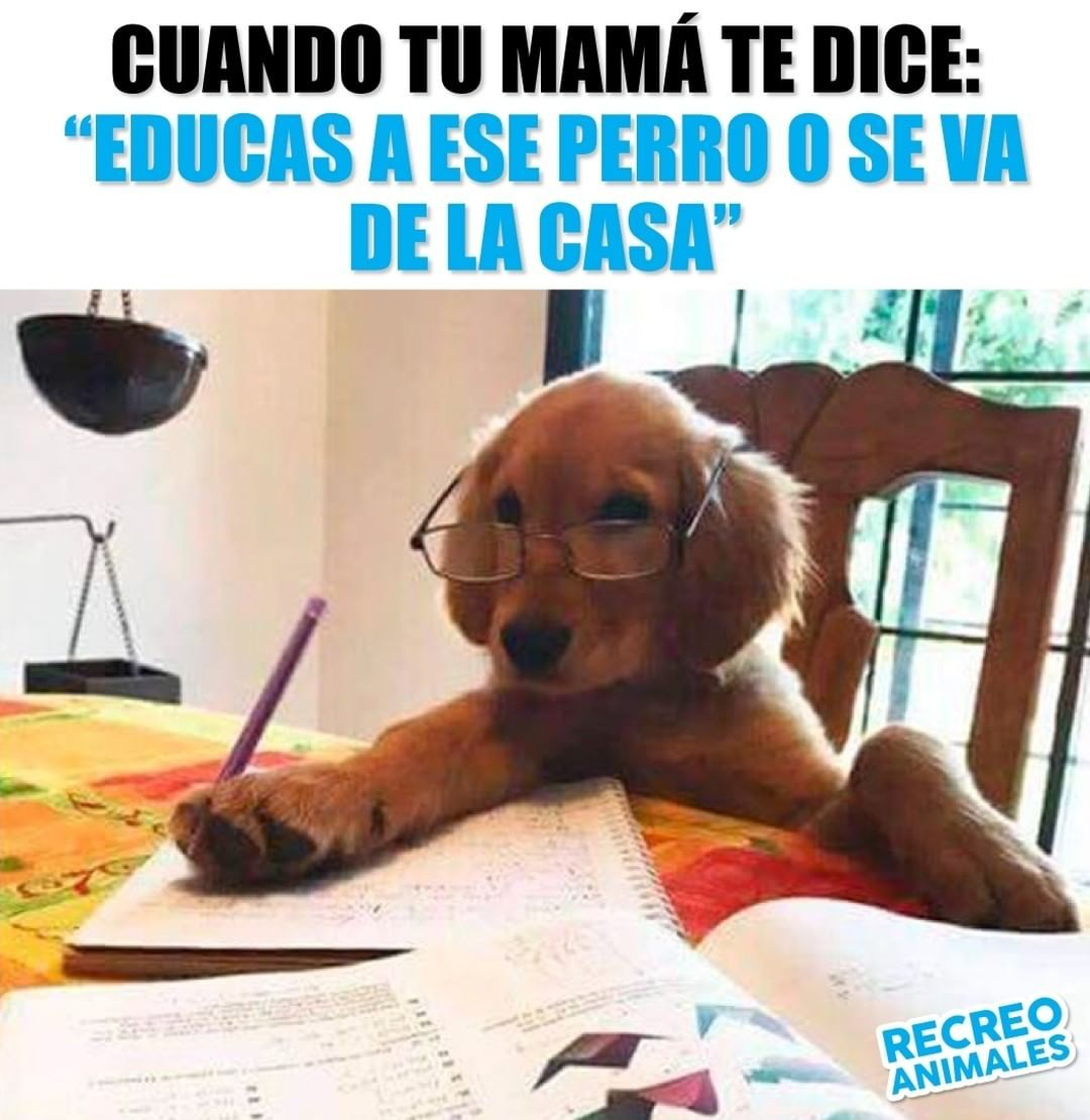La Imagen Puede Contener Texto Memes De Perros Chistosos Humor Divertido Sobre Animales Memes Perros