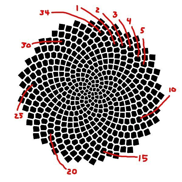 Image result for template fibonacci sequence collage circular Om - geometric sequence example