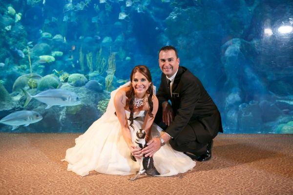 The Aquarium Wedding Of David Gabby Who Are Both Marine Biologists Aquarium Wedding Aquarium Wedding Decorations Ocean Wedding Theme
