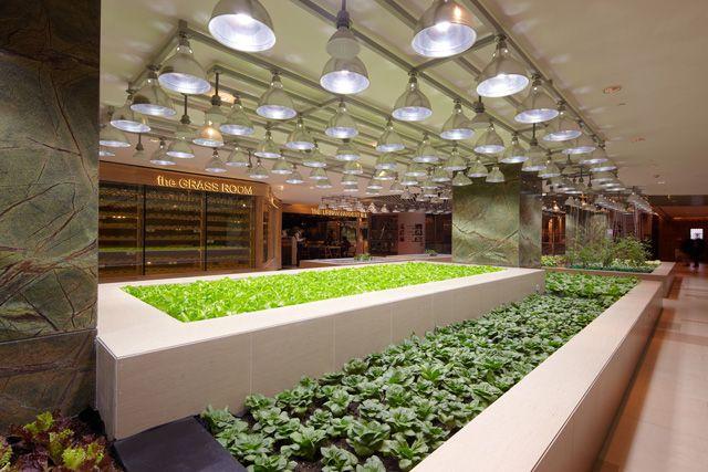 shanghai k11 restaurants - Google Search