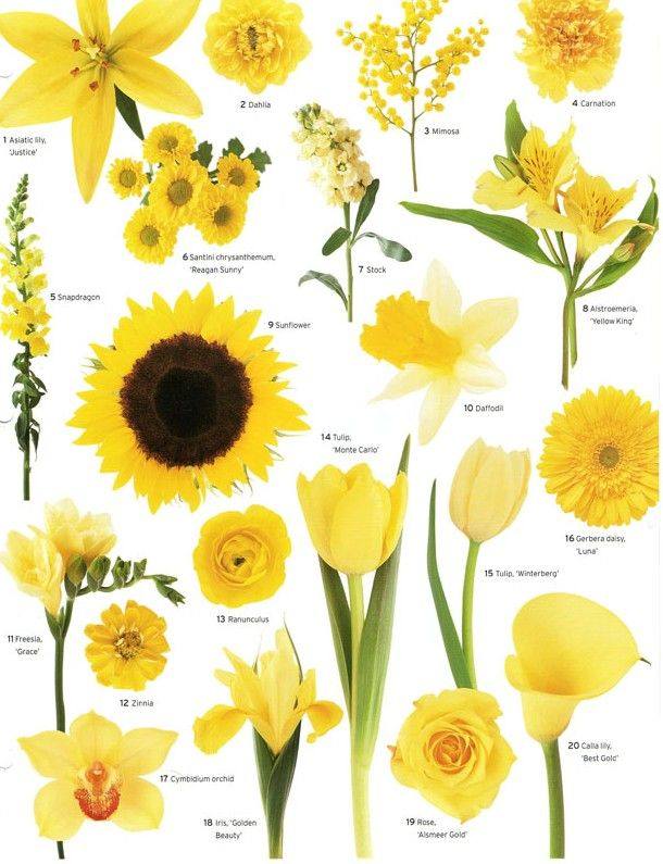 A Little Flower Education For Your Wednesday Evening Courtesy Of Martha Stewart Weddings Have A Good Types Of Flowers Vintage Wedding Flowers Yellow Flowers