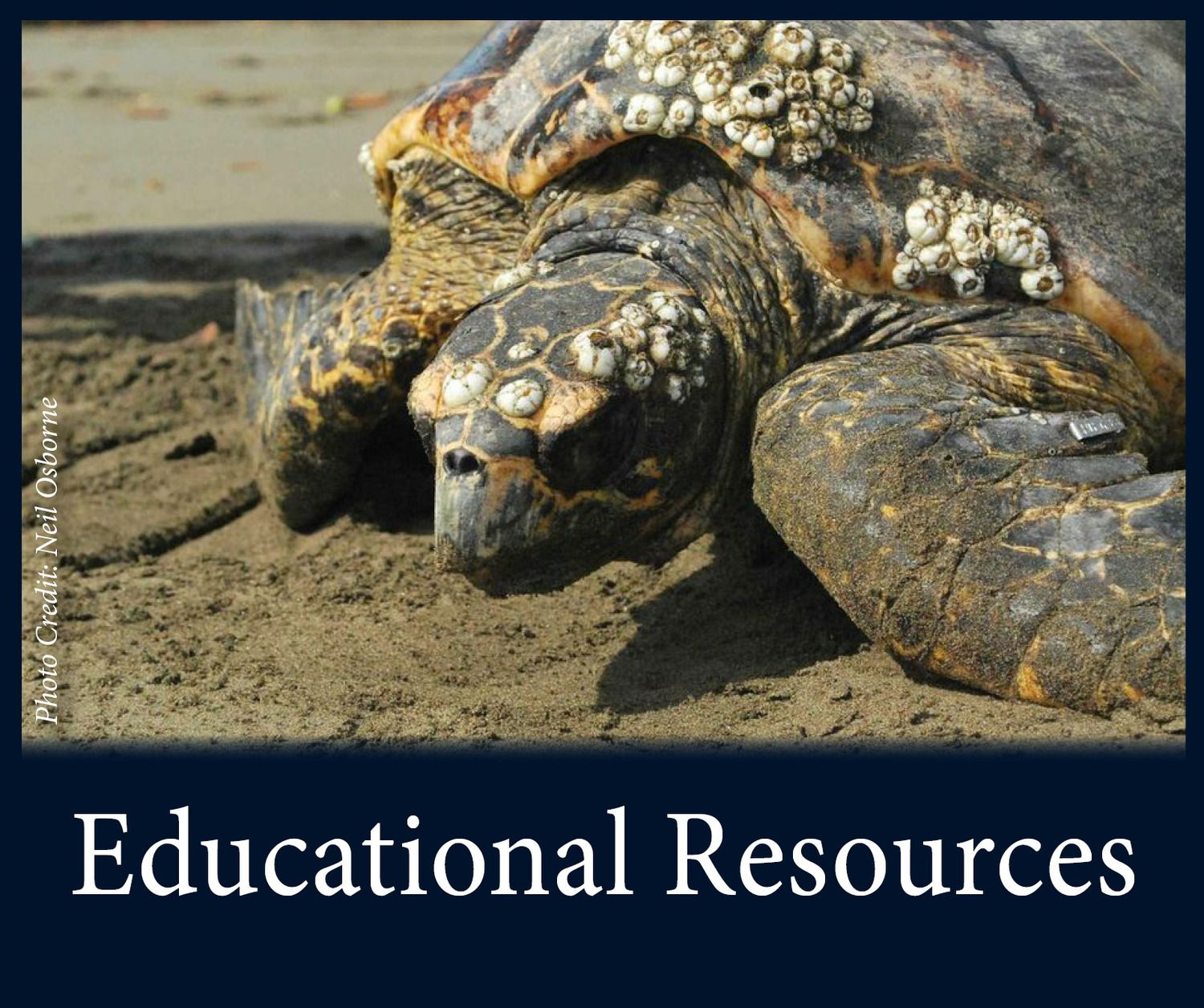 Download Free Sea Turtle Lesson Plans For Teachers