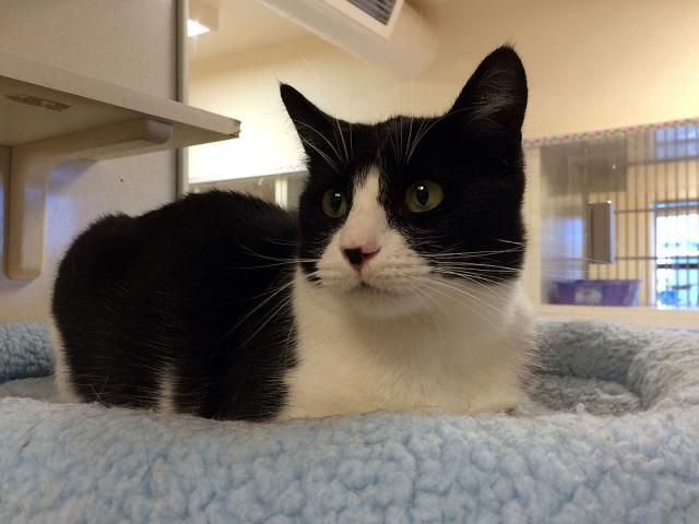 Adopt Mason on Fur babies, Cats, Adoption