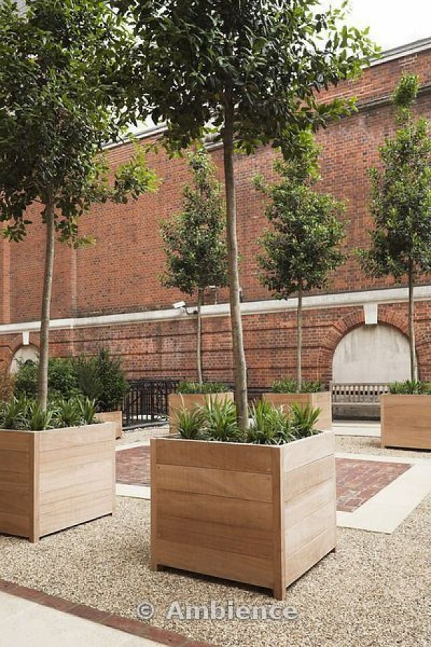Iroko wood planters with singlestemmed evergreen trees and perennial plants set on gravel surface between york stone and red brick paving Description from uk I searched f...
