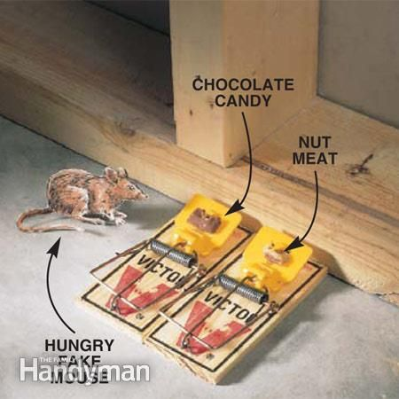 How to Have a MouseFree House Rid of rodents Pinterest Mice
