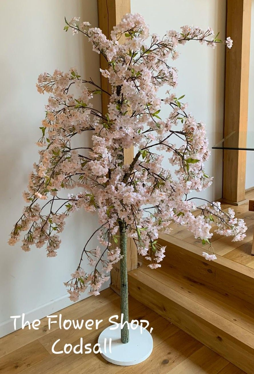 6ft Pink Cherry Blossom Trees Hired Out For Either Side Of The Civil Room Pink Cherry Blossom Tree Cherry Blossom Tree Blossom Trees