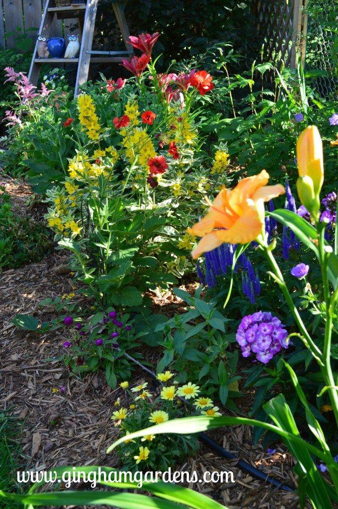 Flower Gardening Ideas: 3 Sisters in 3 Gardening Zones ...