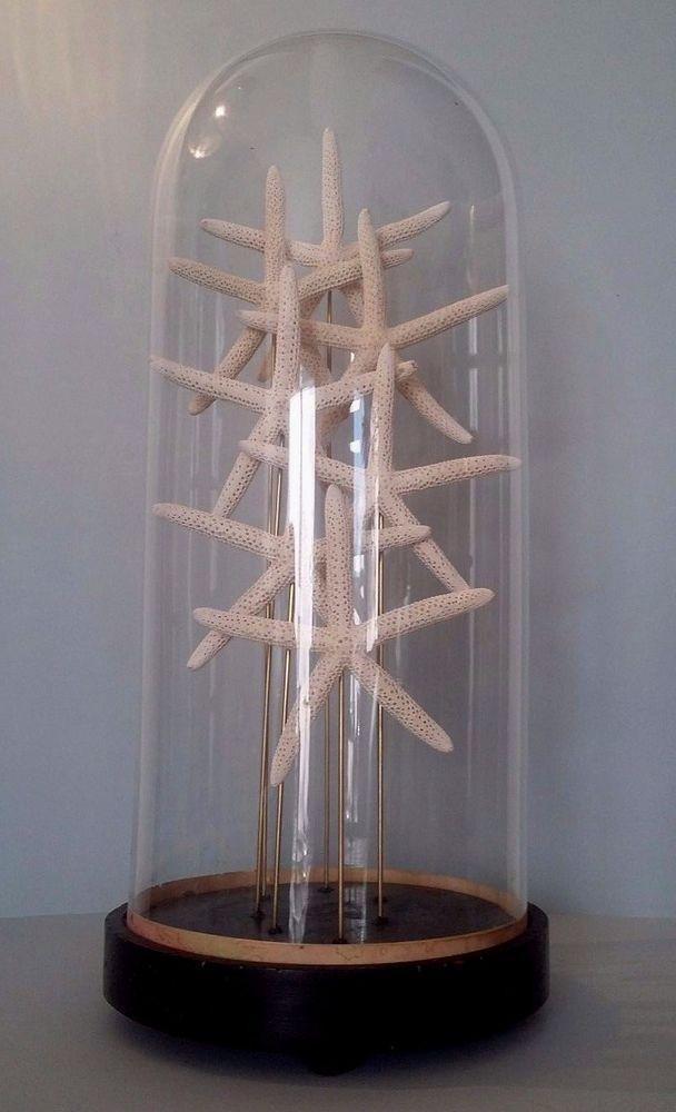 Cabinet de curiosit s globe aux etoiles de mer blanches glass dome starfish oddities pinterest - Globe cabinet de curiosite ...