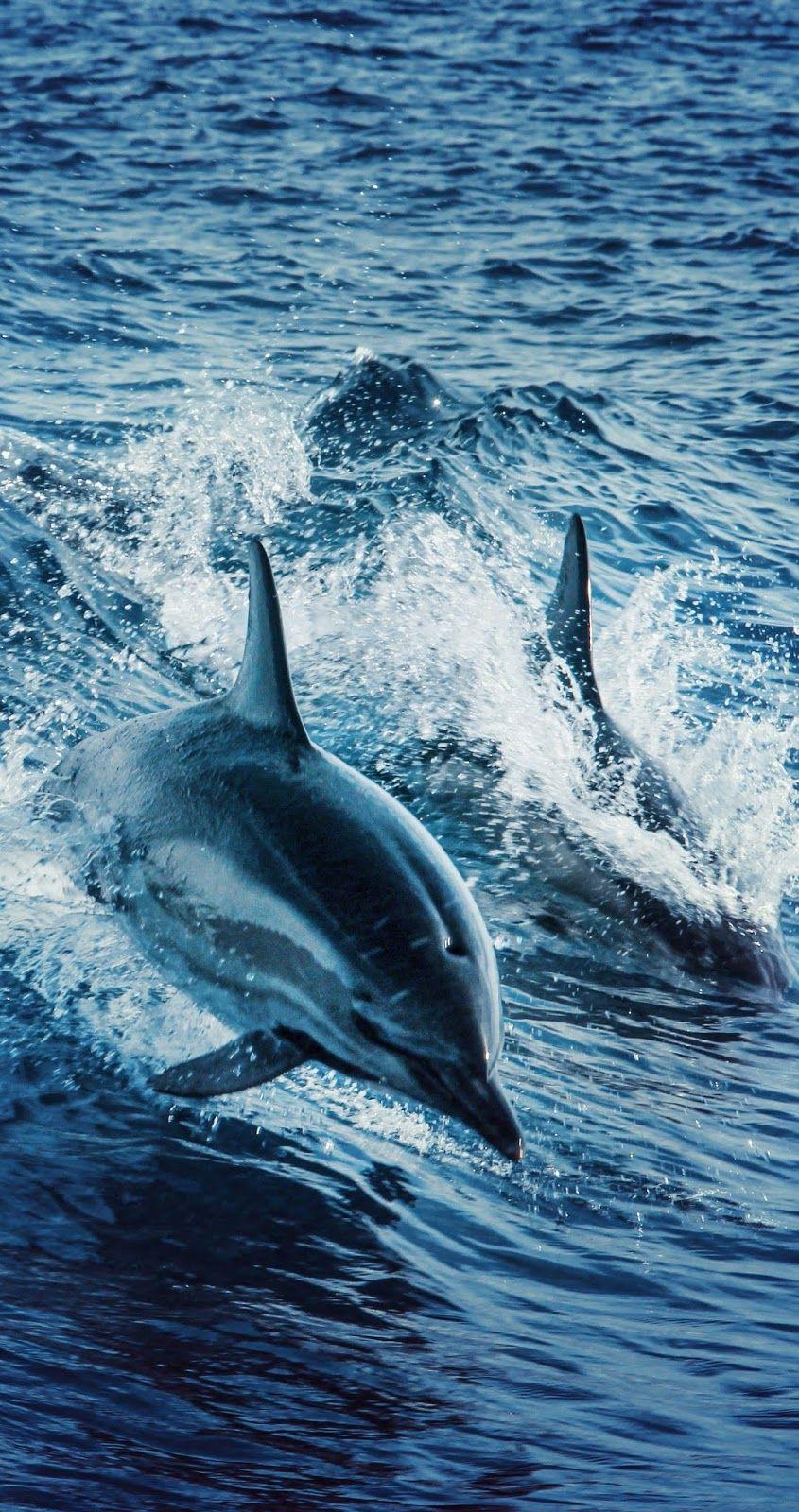 Amazing dolphins swimming. #Animals #AnimalsBeautiful #Dolphin #SeaAnimals