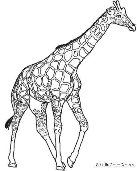 Line Art Giraffe : Powerful giraffe drawing google search products i love