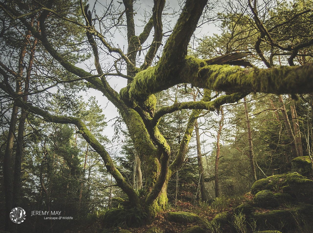 Photograph Forest @Mont Saint Odile by Jérémy May on 500px