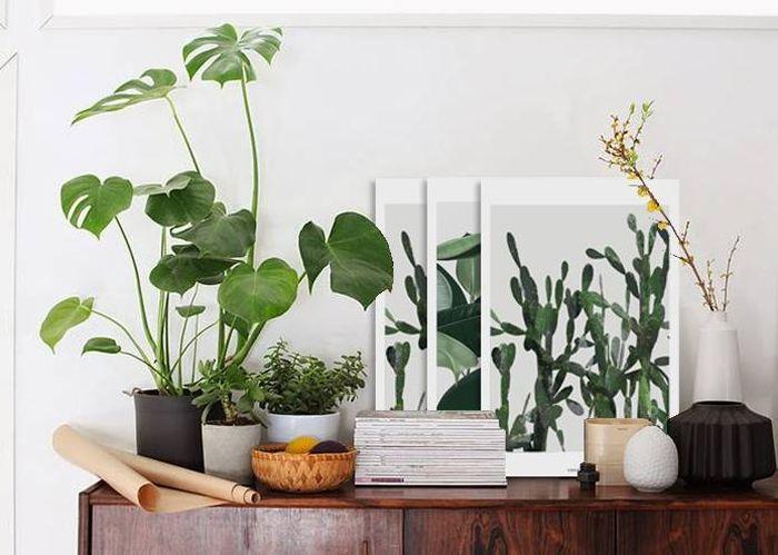 Pingl par gro h storp andersen sur home inspiration pinterest plantes et vert for Plantes vertes appartement