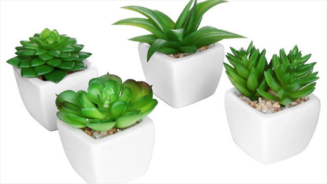 feng shui plant office. 50+ Feng Shui Plants For Office Desk - Contemporary Home Furniture Check More At Plant
