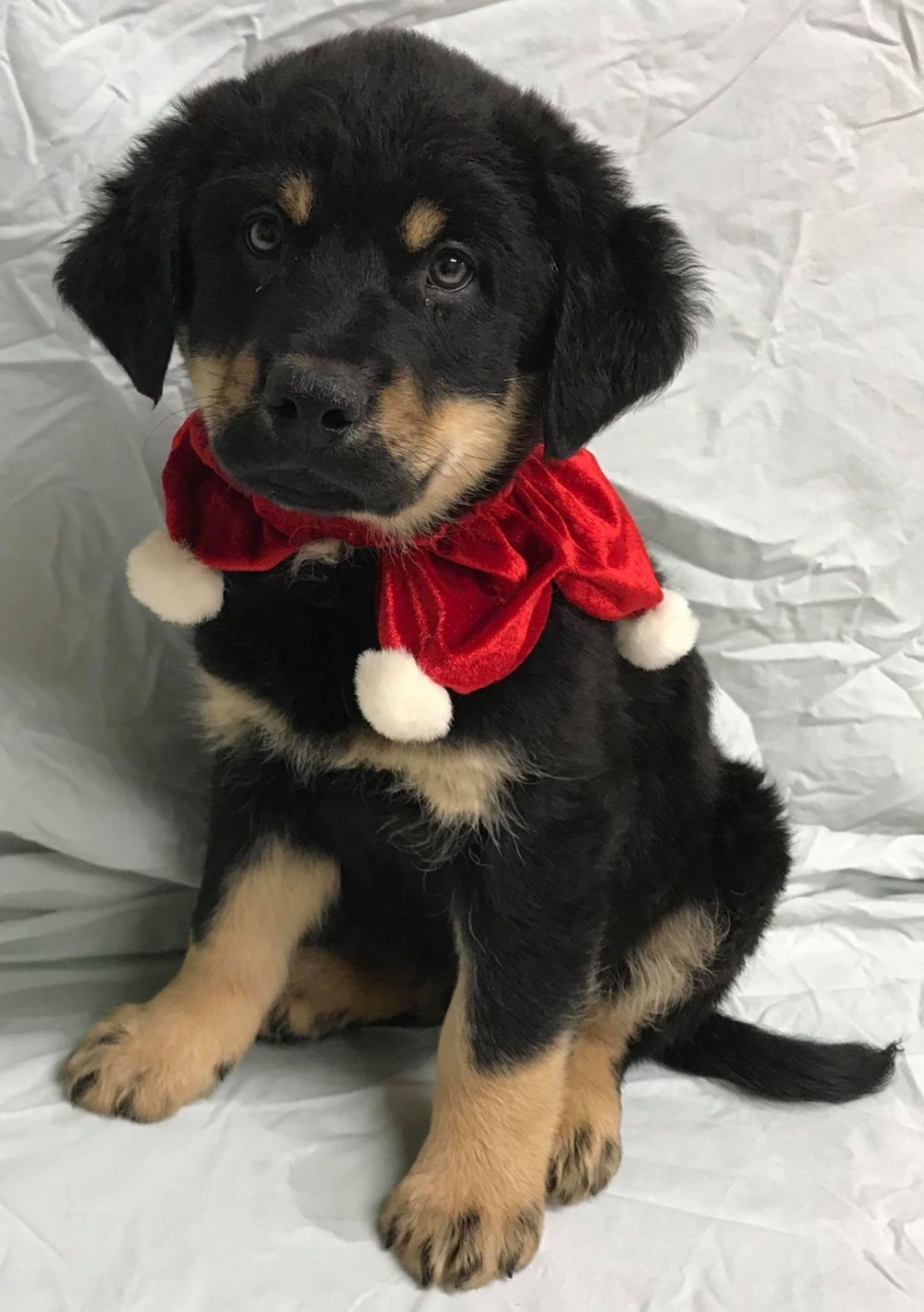 Adopt Ethan On Petfinder In 2020 German Shepherd Rescue Dogs Golden Retriever German Shepherd Dogs