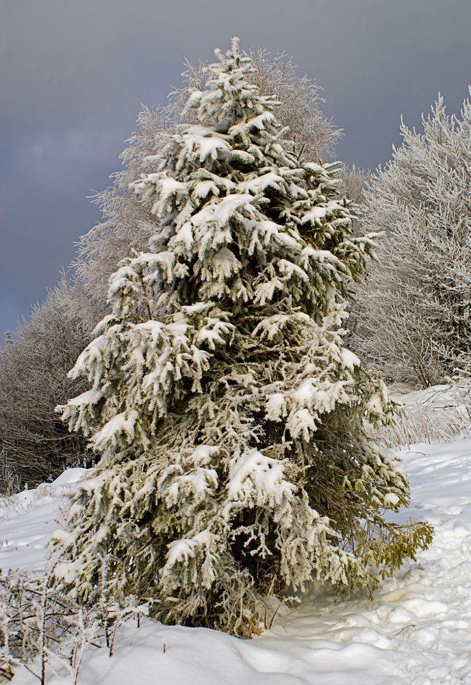 christmas tree by Janusz Łukomski-Prajzner on 500px