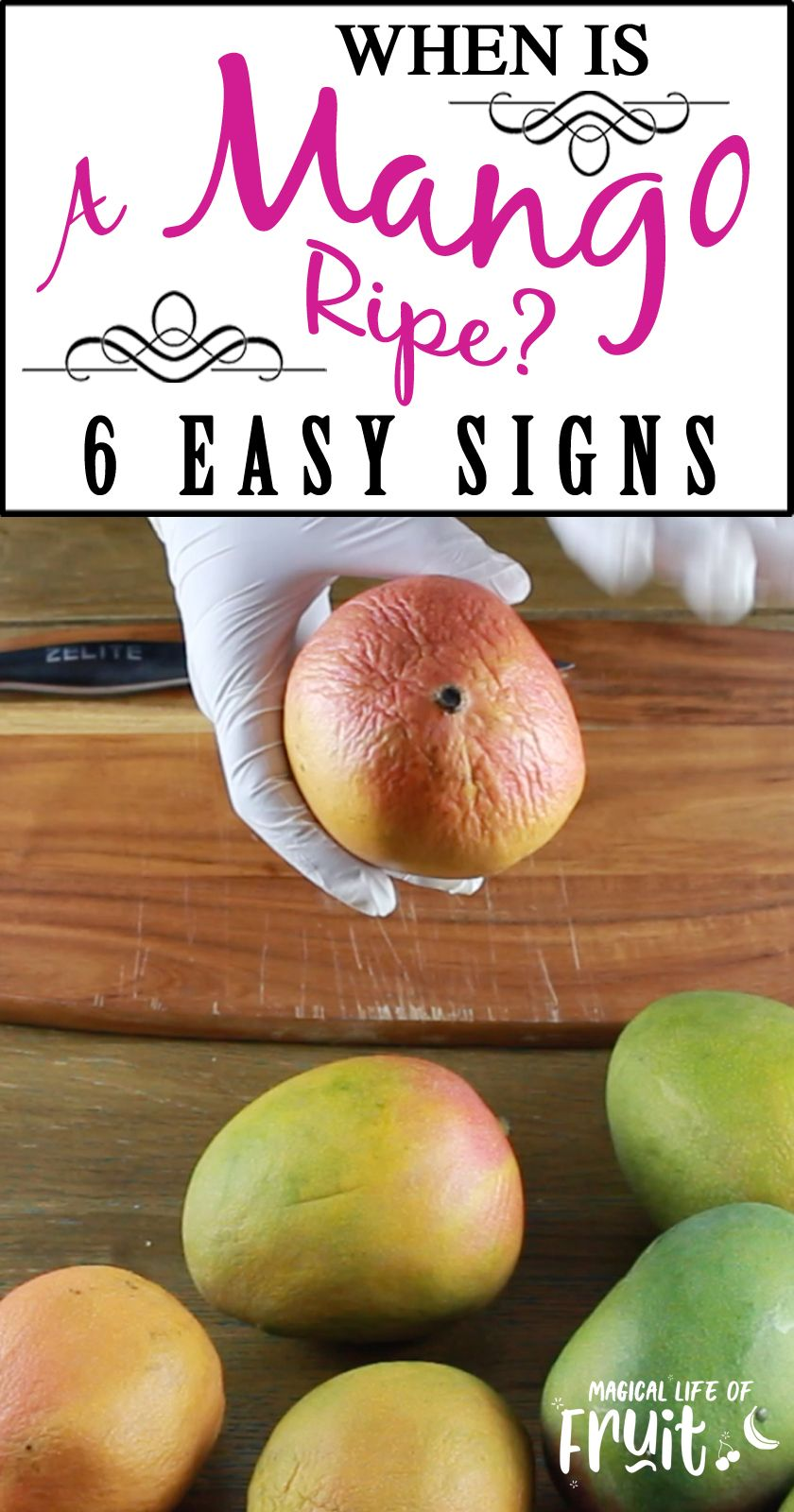 When Is A Mango Ripe 6 Easy Signs Magical Life Of Fruit How To Eat Mango Mango Peeling A Mango