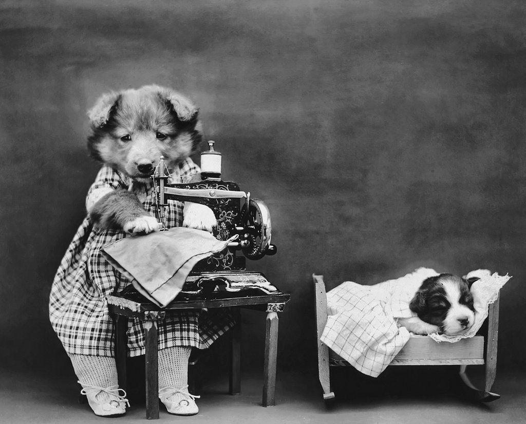 "16in x 20in Giclee Photo Print Harry Whittier Frees was born in Reading, Pa., in the spring of 1879, and was an extremely famous photographer of cutesy animals. He had a ""eureka moment"" at a family b"