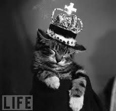 Life Magazine Photo Of Sleeping Kitten Wearing Crown Sleeping