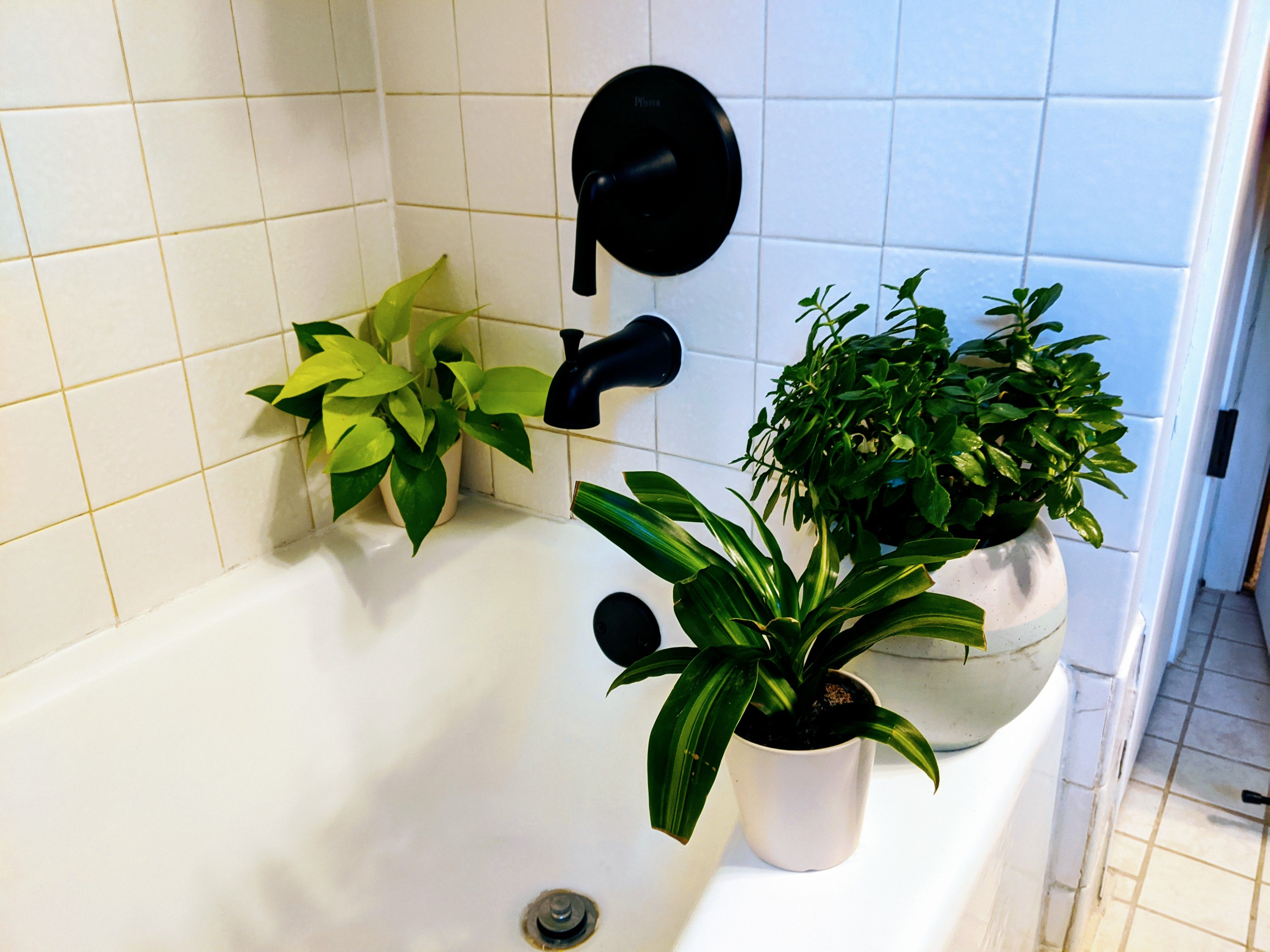 The Top Five Plants For Windowless Bathrooms In 2020 Windowless Bathroom Bathroom Without Windows Bathroom Plants