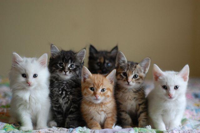 kittiesss :)