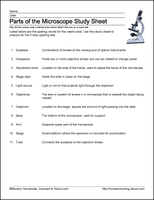 Parts Of The Microscope Printables Word Searches And More Science Worksheets Microscope Lesson Science Skills