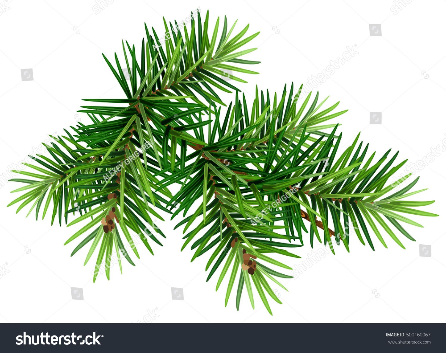 Green Christmas Pine Tree Branch Isolated On White Vector Illustration Palm Tree Vector Branch Vector Pine Leaf