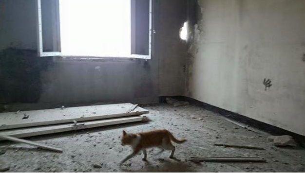 Checking My House Aleppo Syria Cats قطط عم بتفقد بيتي حلب سوريا Aleppo Syria Aleppo Syria