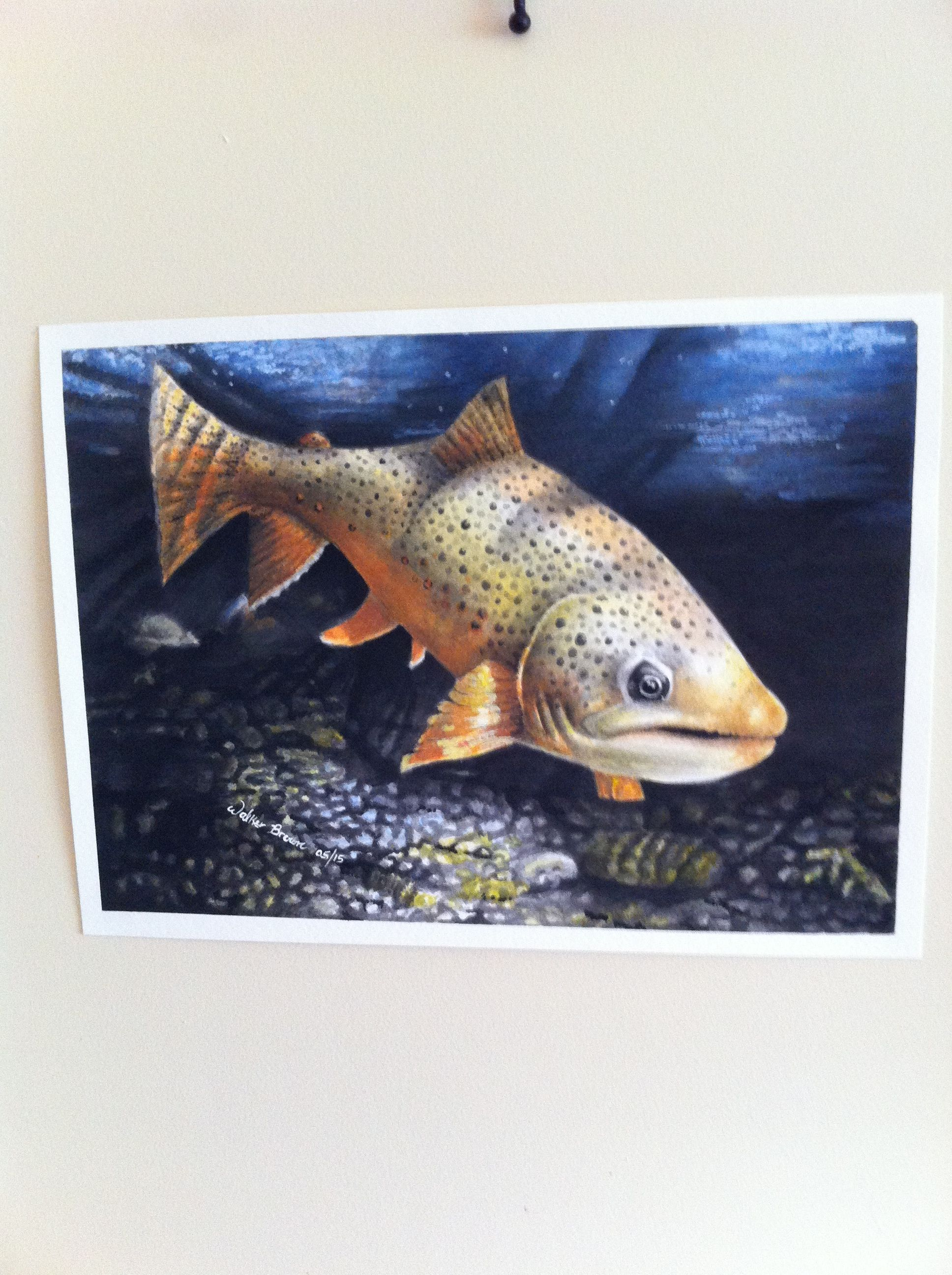 Marcey done a portrait of a Brown trout for a customer.