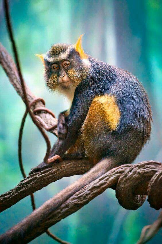 Kurt Mona Maymunu Ausgestopftes Tier Susse Baby Tiere Tiere Wild