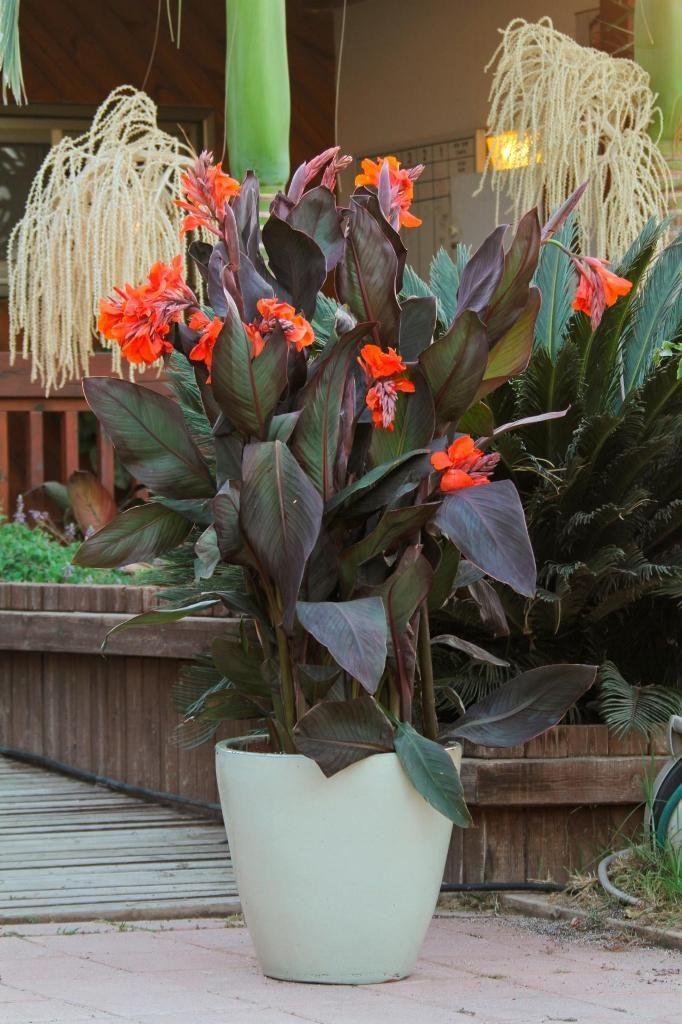 Exterieur: Beleuchtetes Gartendesign für Tropen aus der Moderne und dem ...,  #aus #Beleuchte... #tropischelandschaftsgestaltung