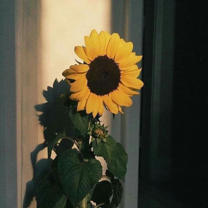 Pin by Carmell Angela on flower in 2020 | Flower aesthetic ...