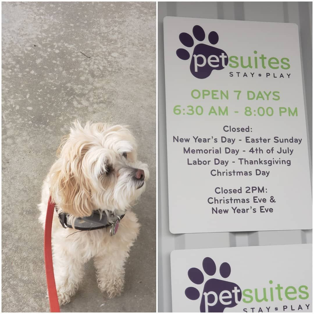 New The 10 Best Home Decor With Pictures Walked My Hooman To The Fun Place And Didn T Want To Leave So I Got To Stay Fun P Memorial Day Cavapoo