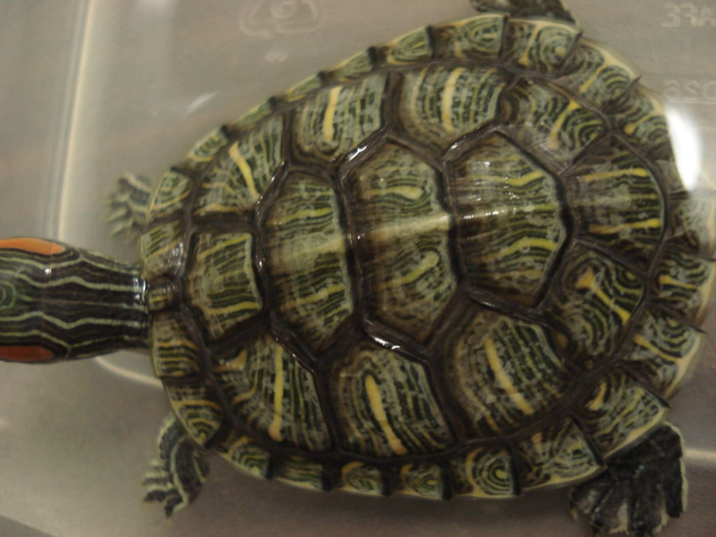 turtle shell - Google Search