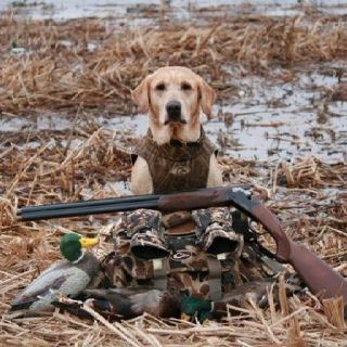 Pin On Upland Hunting
