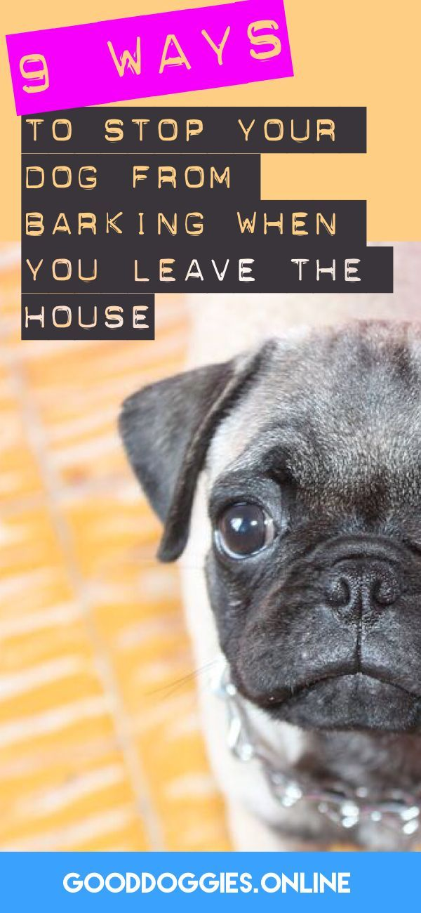 How To Stop A Dog From Barking When You Leave House Dog Training Obedience Dog Training Dog Training Tips