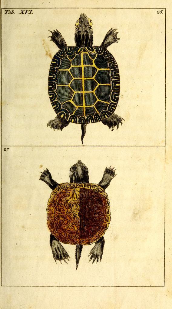 Unterhaltungen aus der Naturgeschichte: Die Amphibien, Vol 3 ...