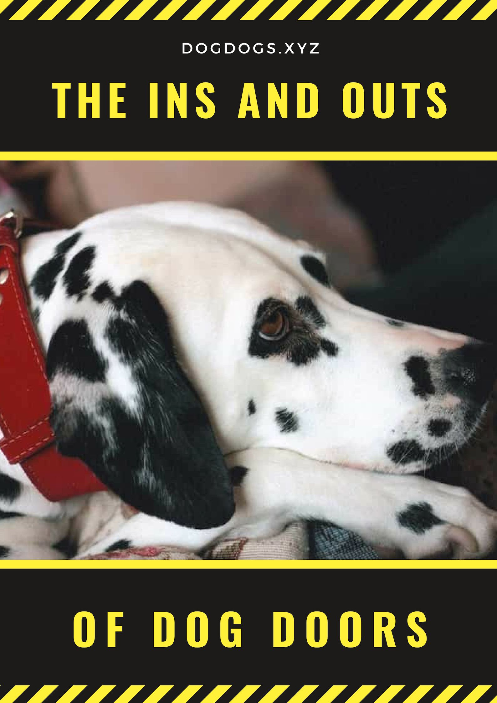 The Ins And Outs Of Dog Doors Dog Door Dogs Buy A Dog