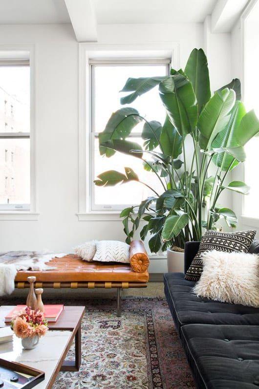 10 Redenen om planten in huis te halen Planten in huis fleuren de boel niet alleen op ook is het goed voor je gezondheid en je energie Wij zetten op The Daily Dutchy tien...