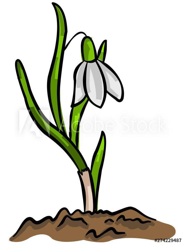 Snowdrop Stock Illustration Illustration Clip Art