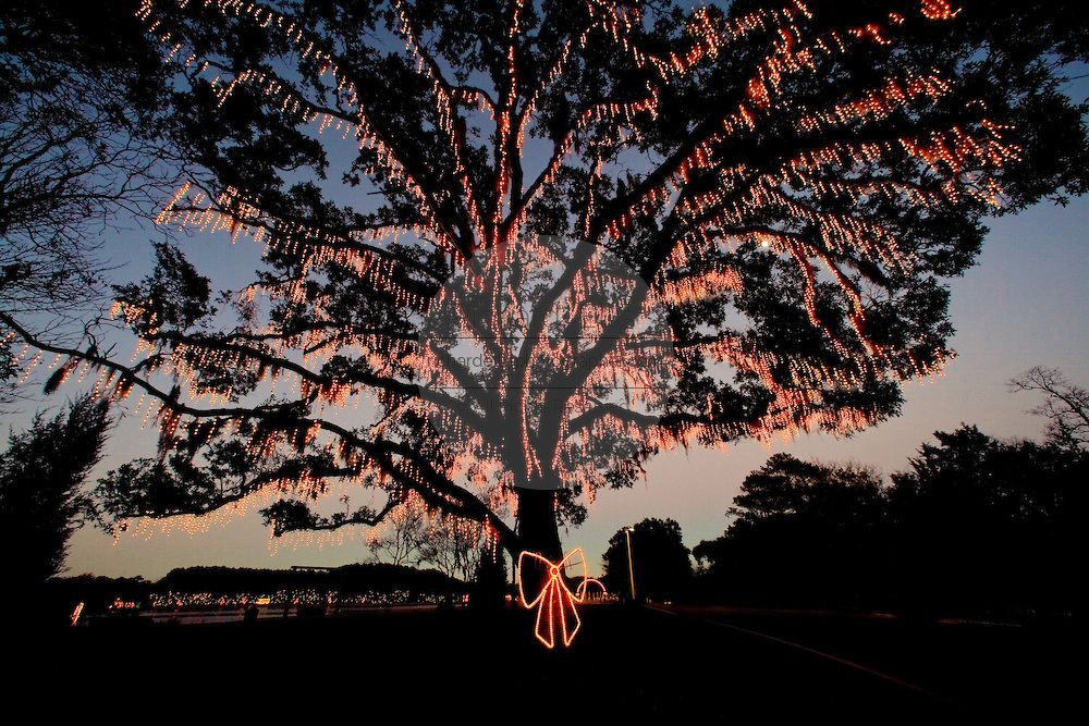 James Island Lights Beauteous Fairy Lights Decorate A Live Oak Tree Mixed In With Spanish Moss On Inspiration Design